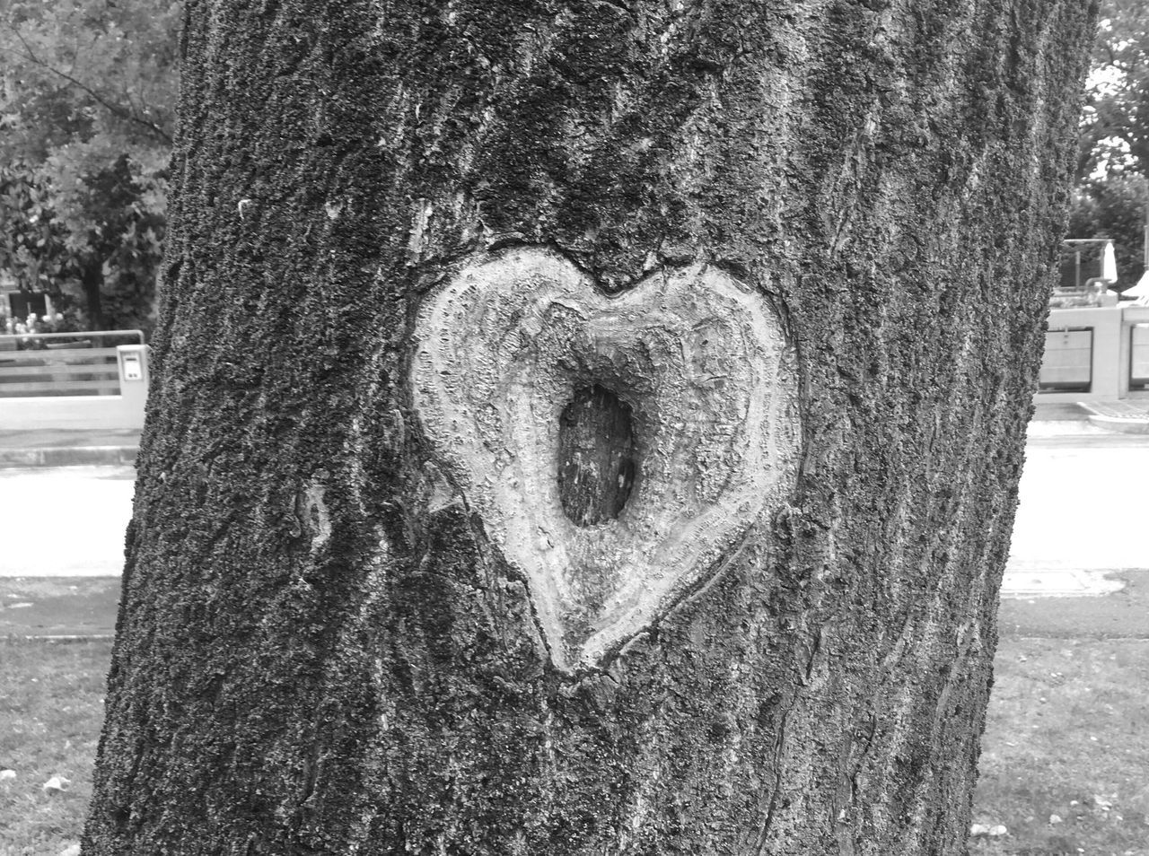 Tree Trunk Heart Shape Nature Outdoors No People Close-up Hearts Tree