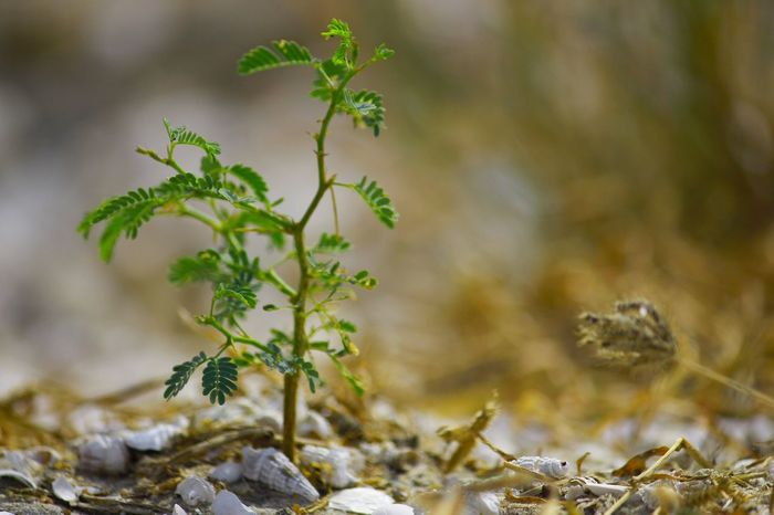 Calm Survival Alone Dryness Shell Cluster Rayofhope Plant Fragility Tiny Branch Leaf Focus Ground Level Lakeside Vision Inspired Nature Found Definition Sand EyeEmNewHere