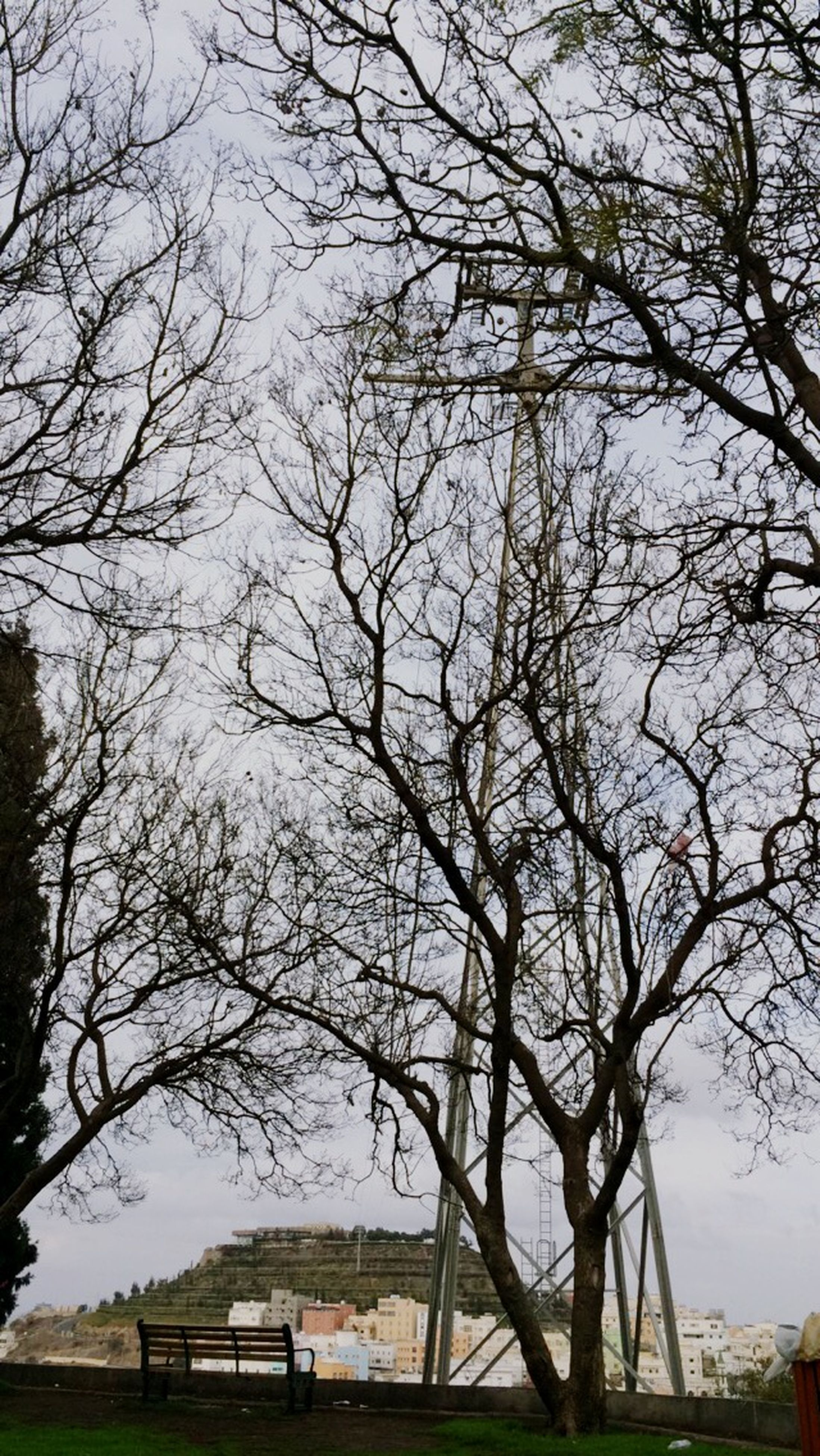tree, bare tree, branch, sky, built structure, nature, grass, bench, tranquility, tree trunk, park - man made space, field, building exterior, architecture, tranquil scene, growth, day, outdoors, beauty in nature, scenics