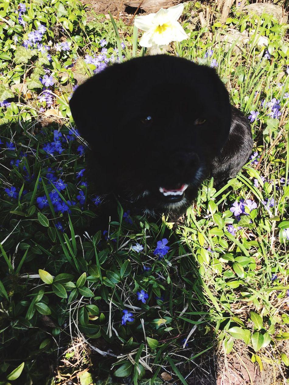 Der süßiste Vierbeiner der Welt Dog Pets First Eyeem Photo
