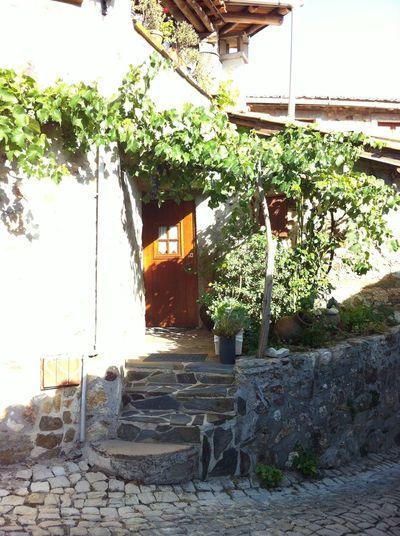 Typical stone village cottage Portugal Typical Portuguese Stone Cottage Architecture Front Door No People Plant Stone Cottage Trailing Grape Vine