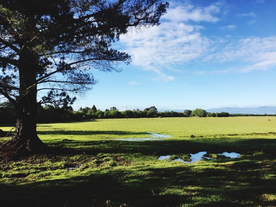Tasmania Longford