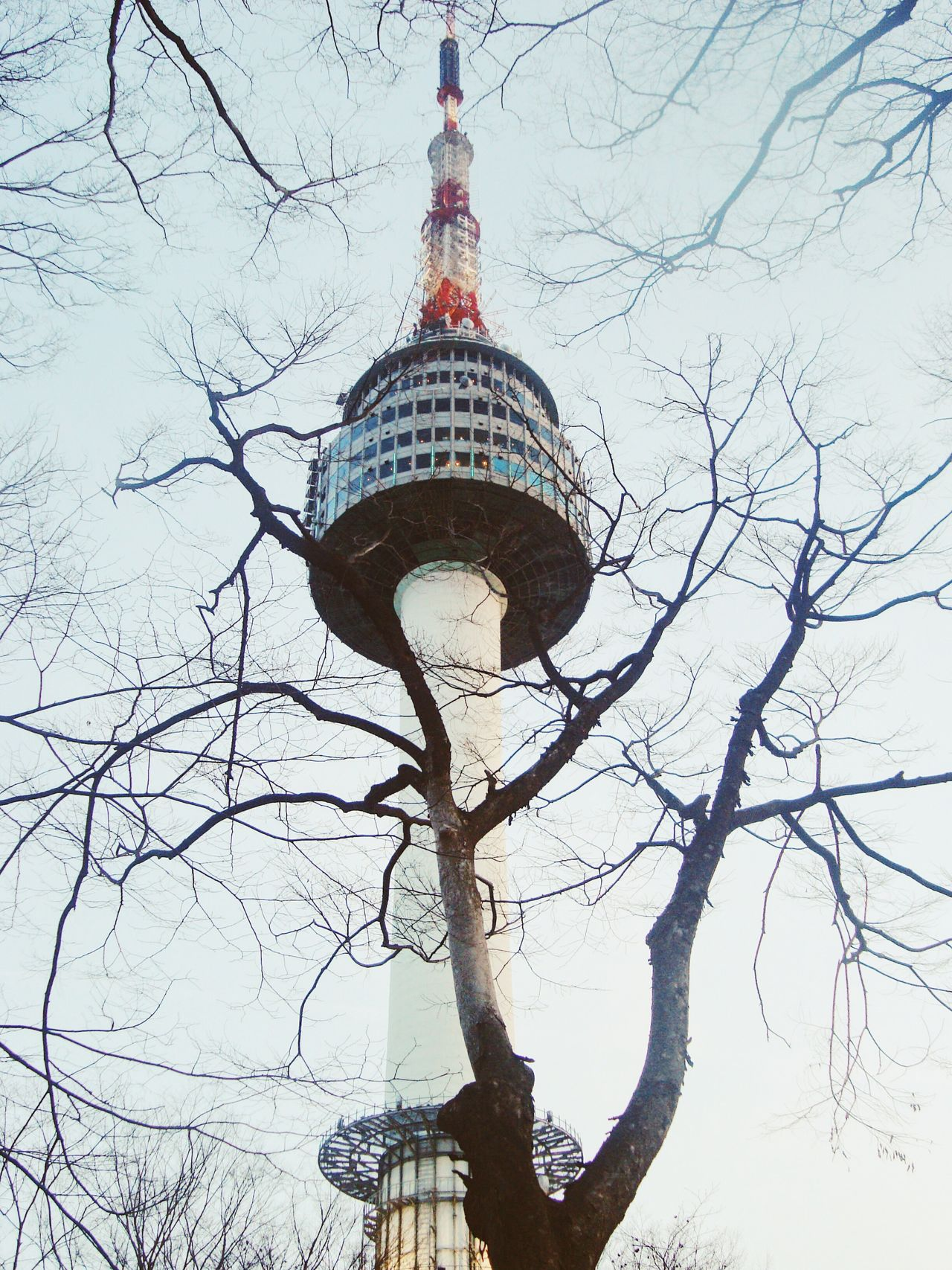 Winter View Tree Travel Tower Korea Skyline Seoul, Korea Scenic Scenery Seoul Tower Destination Architecture Namsan_mountain Building Landmark EyeEmNewHere EyeEmNewHere