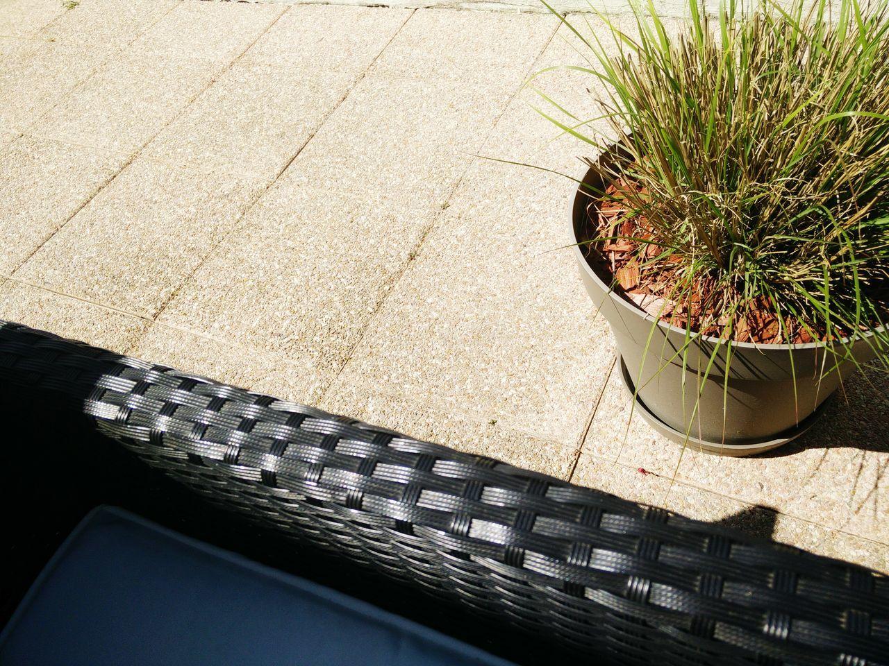 Close-Up Of Pot Plant On Flooring