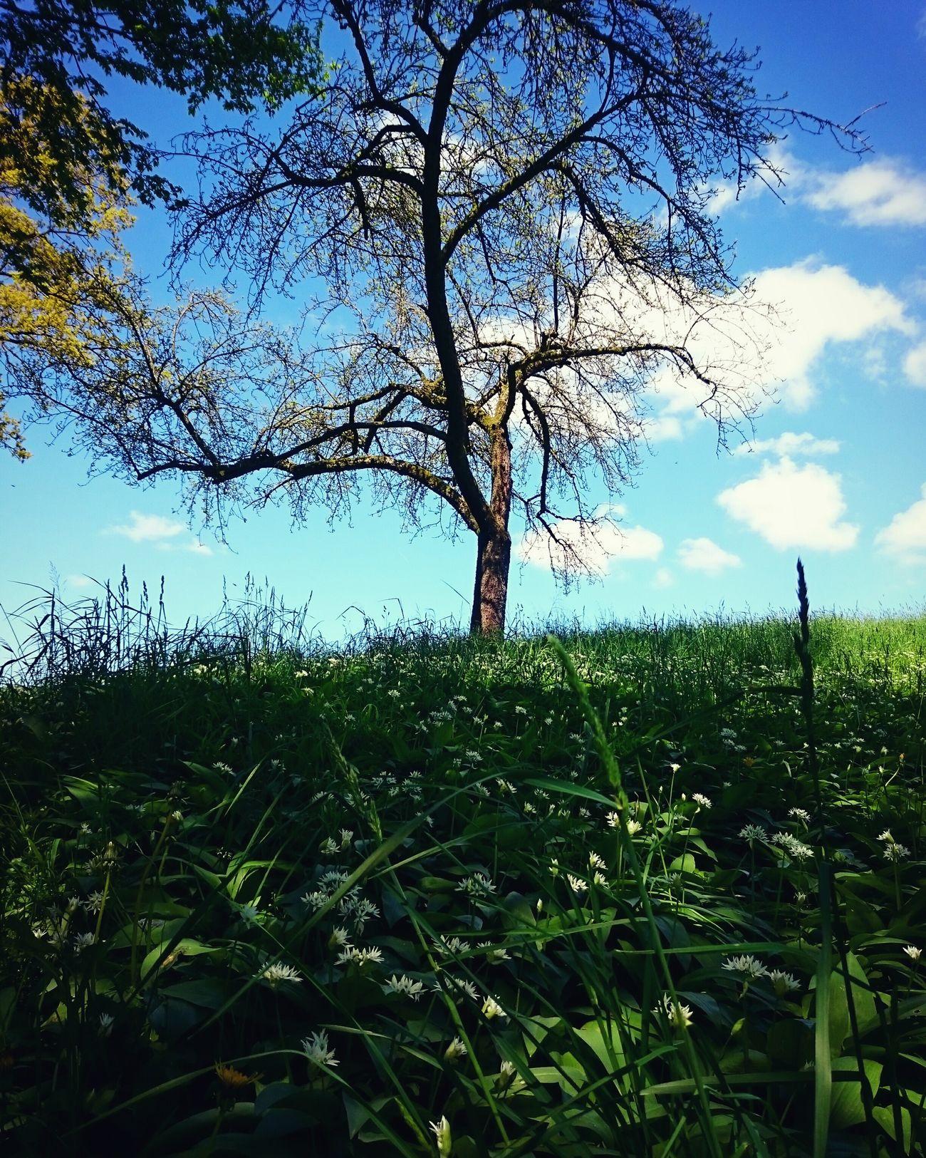 Natur pur 😍 First Eyeem Photo Treelover  Nature Photography Naturpur Wanderlust Bärlauch  Baum