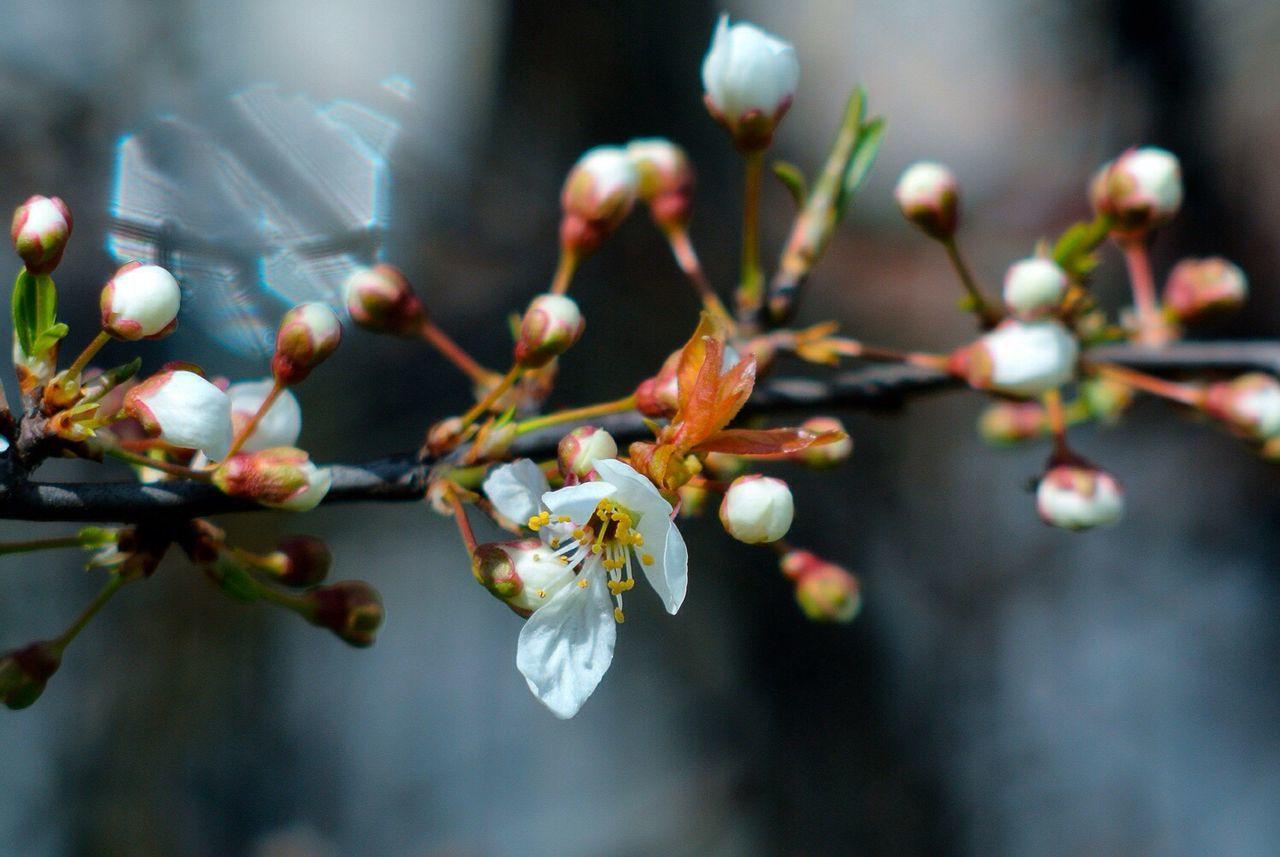 Spring Nikon 1 V1