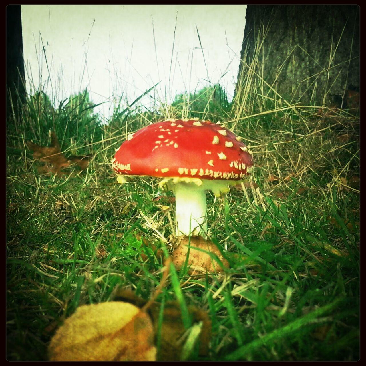 Mushroom Shroomin'
