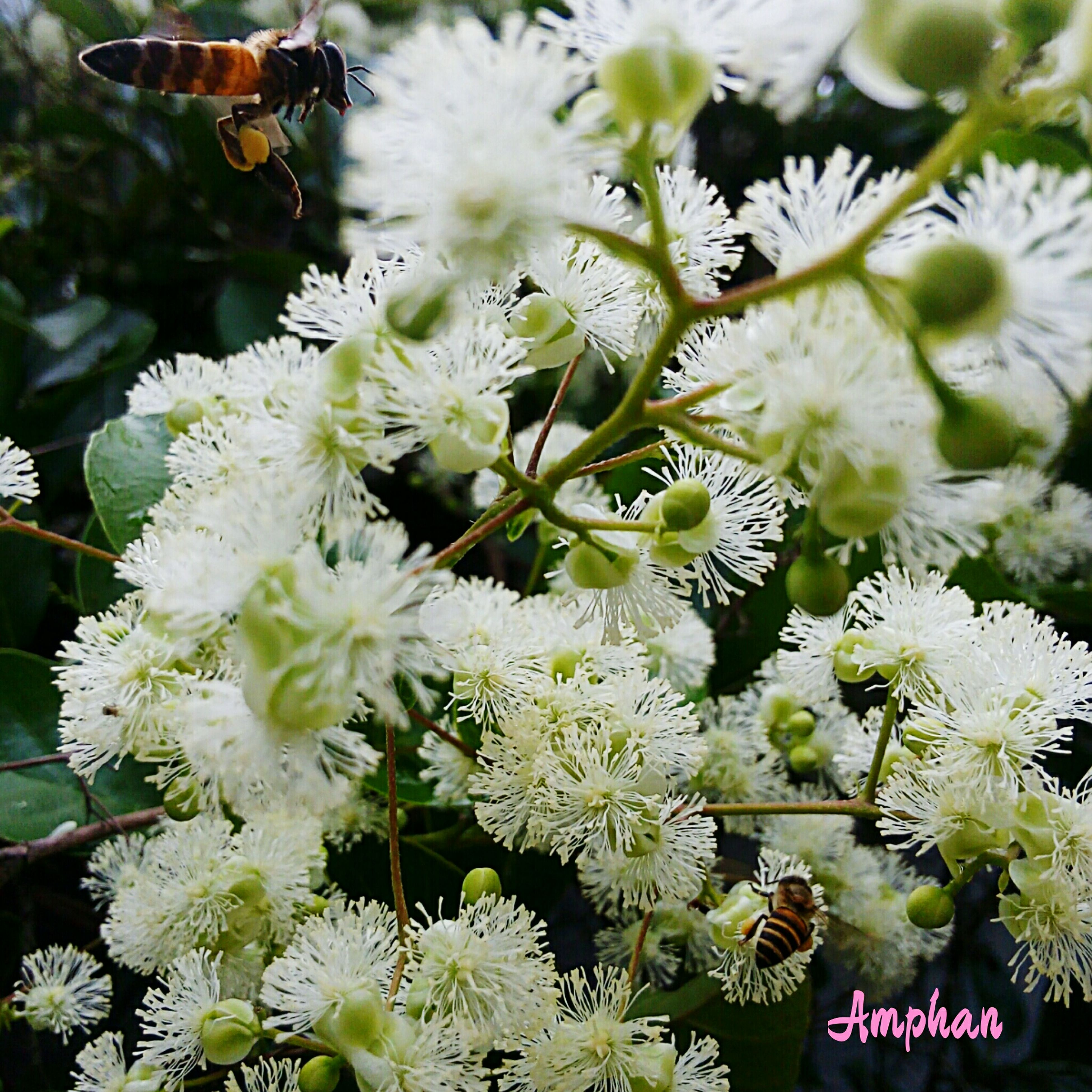 flower, growth, white color, freshness, plant, nature, beauty in nature, leaf, fragility, focus on foreground, close-up, blooming, day, tree, branch, outdoors, petal, no people, in bloom, green color