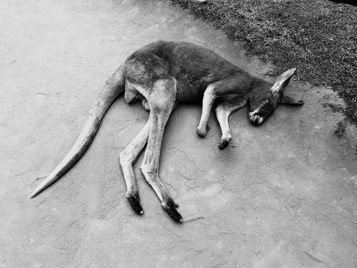 I need to spleep better Zoo animals First Eyeem Photo