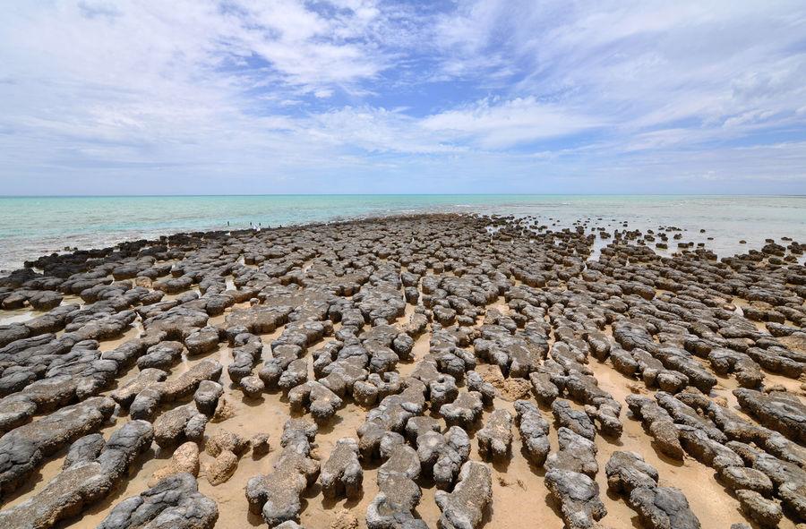 Australia Geology Horizon Over Water Natural Heritage Ocean Old Old Age Stromatolites Tranquil Scene