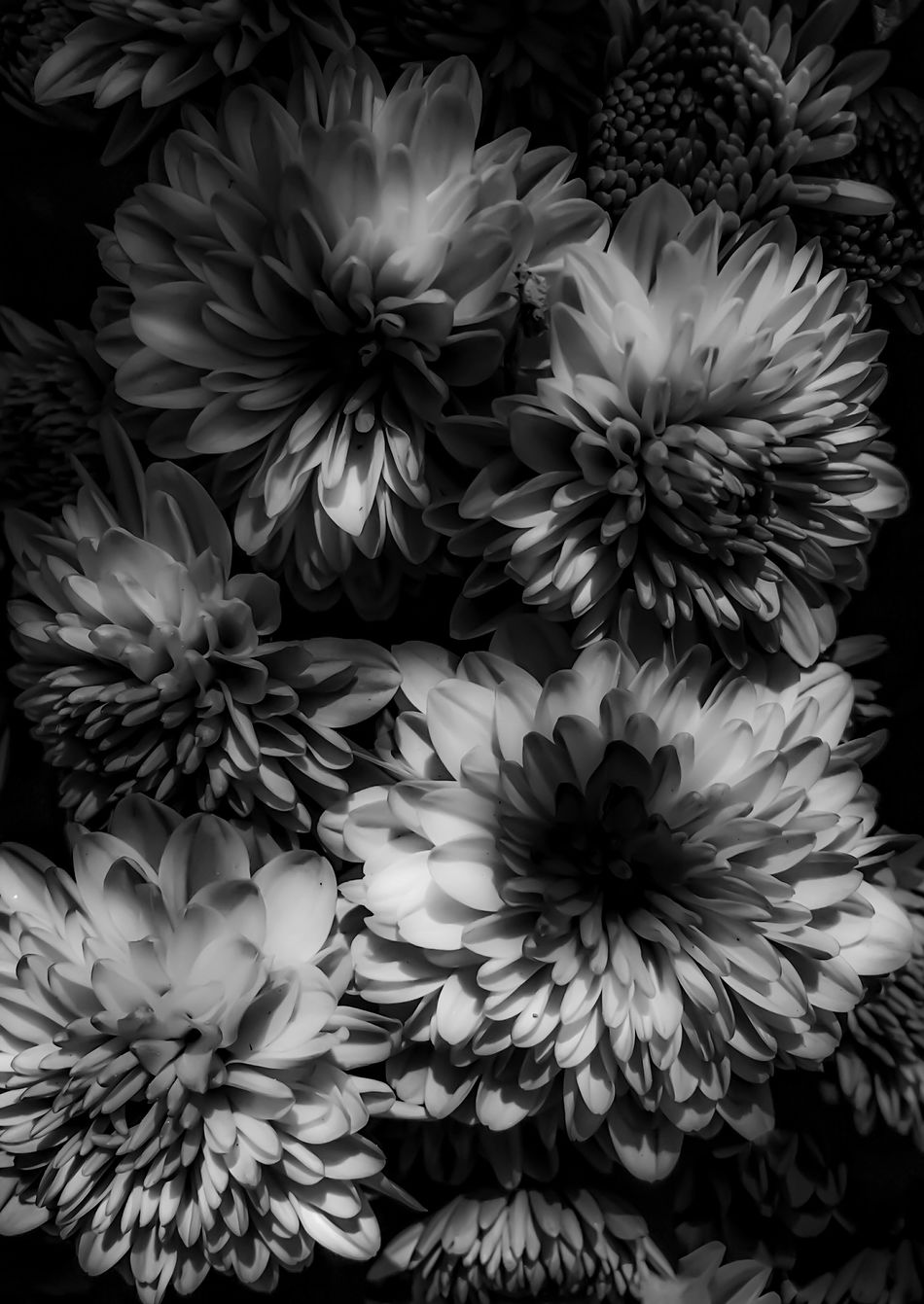 Flowers light up my world... Nature EyeEm Nature Lover Fortheloveofblackandwhite Blackandwhite Black And White Flowers IPhoneography Deceptively Simple Learn & Shoot: Single Light Source Light And Shadow