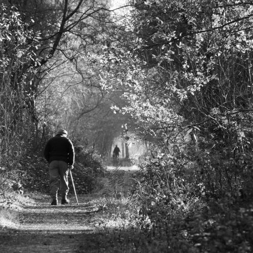 A man walking a dog in the early morning sunshine in the woods Avenue Day Dog Monochrome Morning Sunshine Square Format Trees Vanishing Point Walking Woods Creech Woods Telling Stories Differently