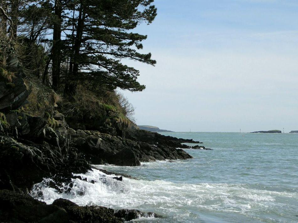 Coastal view Rocky Coastline Waves Crashing On Rocks Pine Trees Monterey Pine Celtic Sea Glandore, Ireland West Cork Wildatlanticway Ireland