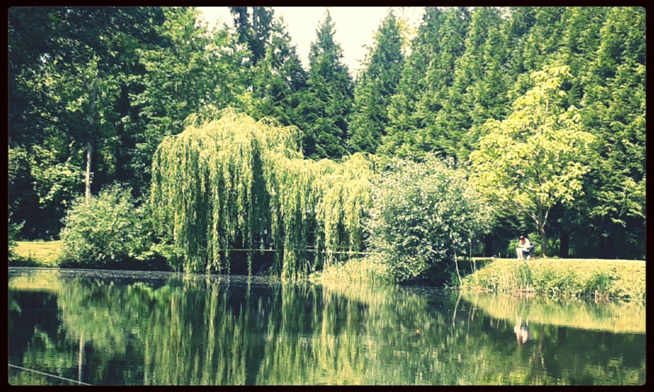 Nature étang