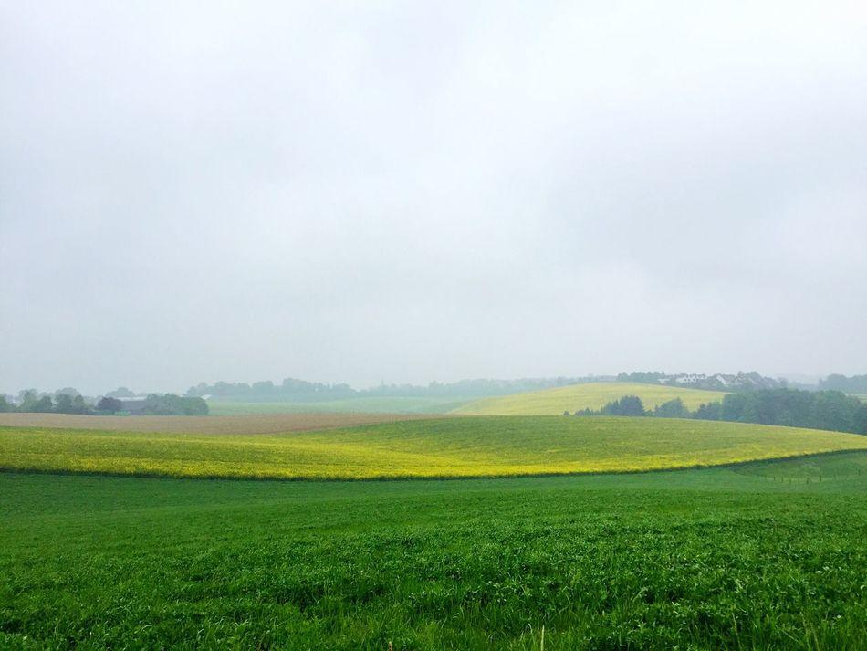 Field Landscape Nature EyeEm Nature Lover Landscape_Collection Germany OpenEdit RapeFlowers Green Trees