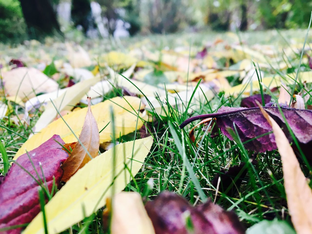My garden! Nature Outdoors No People Beauty In Nature Day Autumn Grass Hungary Withphone Nophotoshop Tree Sun Sunshine Leaf NoEffects  Noeffect
