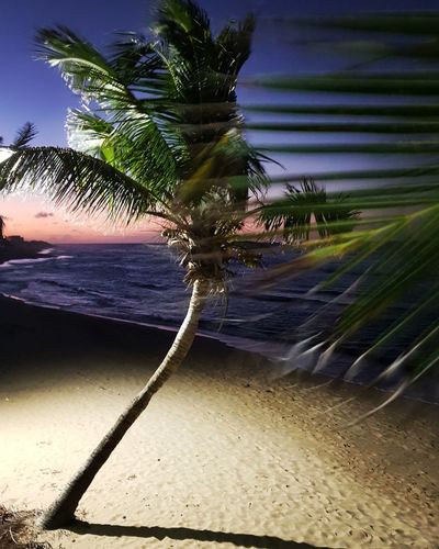 Tree Palm Tree Nature No People Outdoors Sand Day Beach Sky
