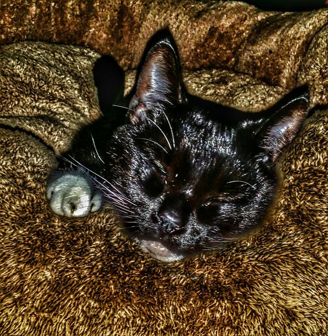 Little missie girl mommy's girl Share What You Love Black Cat Collection Cat Collection Save A Life Adopt For The Love Of Photography Life Is A Journey Special Effects Enjoy The Little Things Share A Photograph Adopt To Save A Life