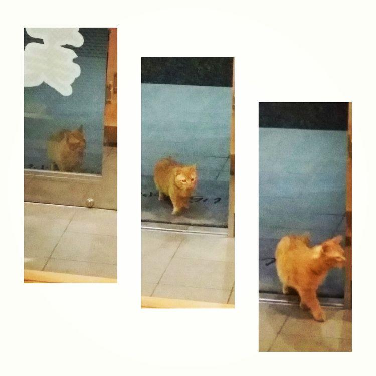 First Eyeem Photo Cat 猫 ネコ