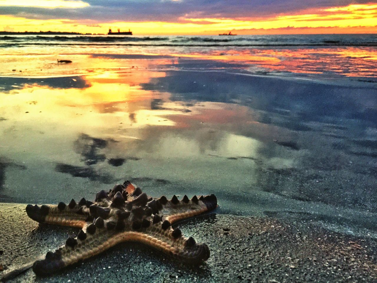 water, sunset, nature, beauty in nature, no people, beach, sea, outdoors, scenics, animal themes, sky, day, close-up