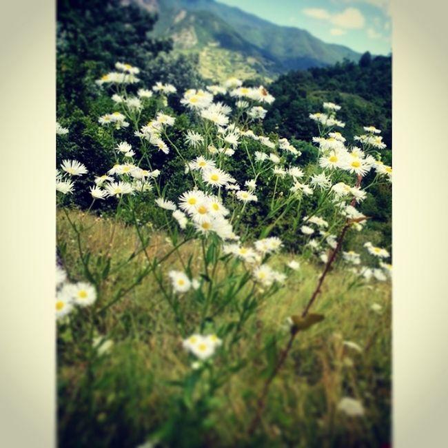 Beautiful ♥ Natural Dazy