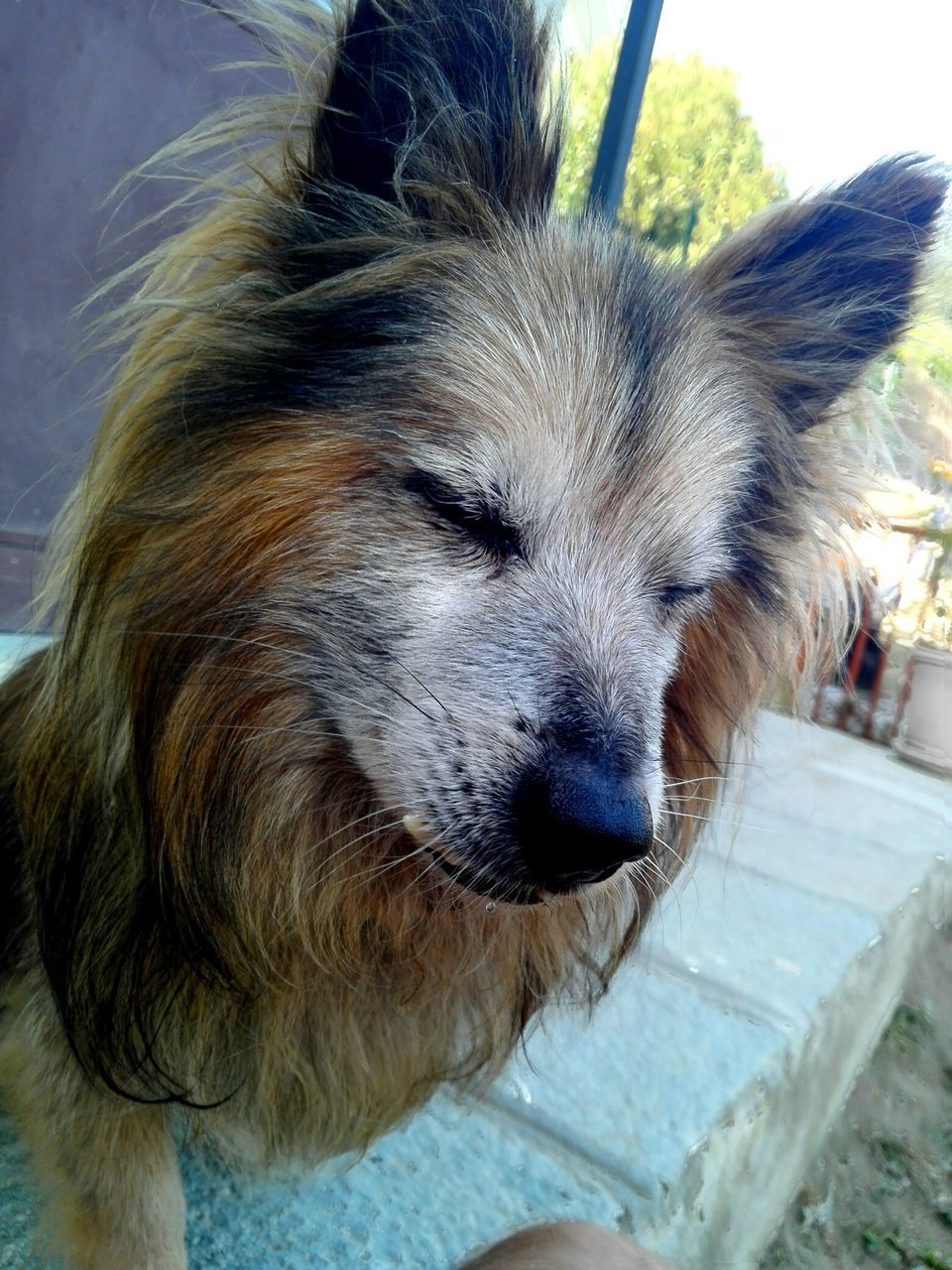 dog, one animal, animal themes, pets, domestic animals, mammal, close-up, day, outdoors, no people, portrait