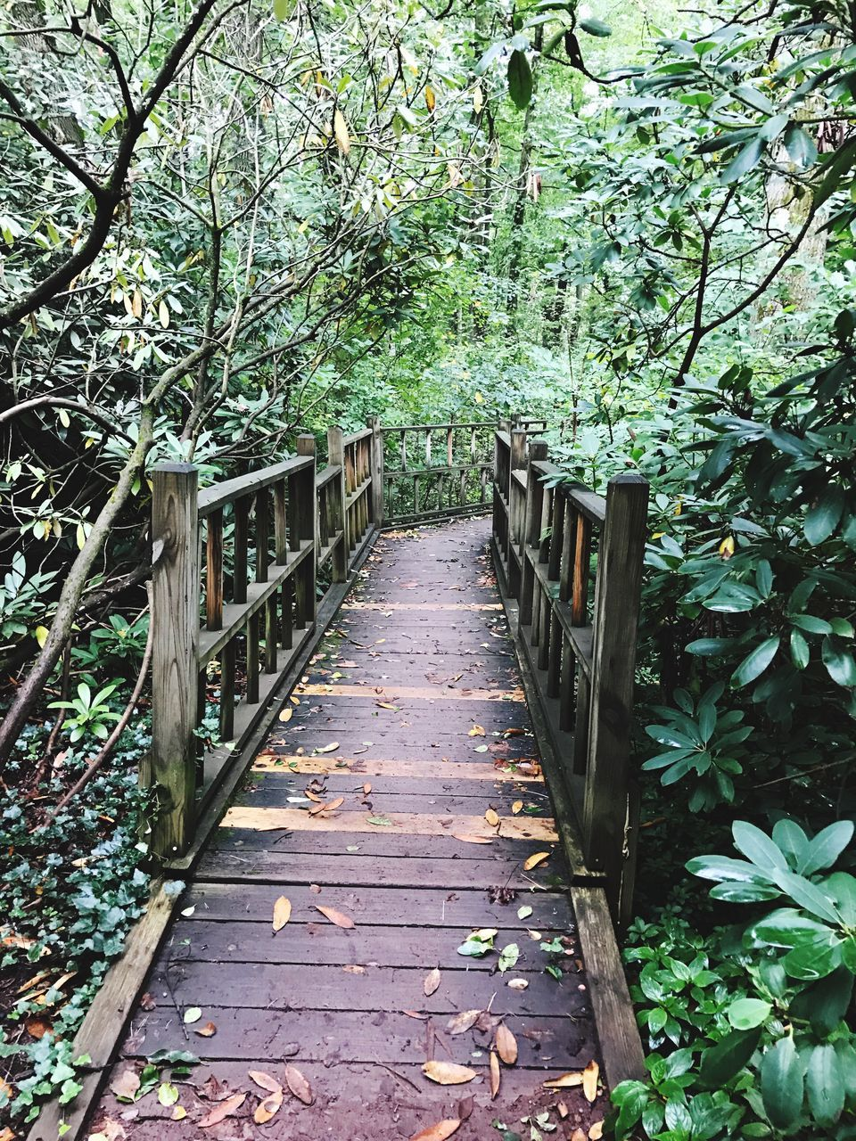tree, growth, nature, leaf, railing, outdoors, tranquility, day, beauty in nature, no people, plant, the way forward, footbridge, branch