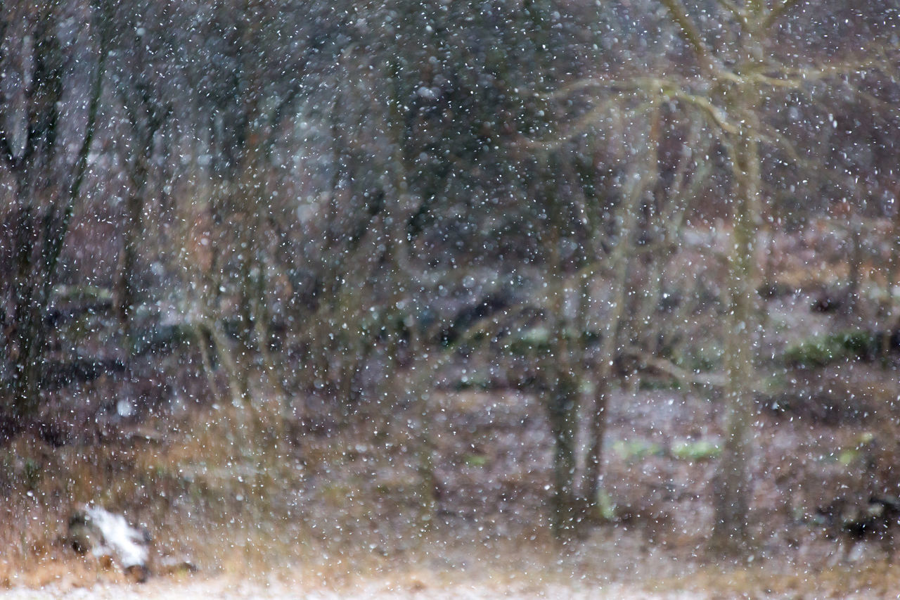 Cold Weather Falling Snow Nature Nature Photograhy Nature Photography Out Of Focus Painting Snow Swedish Winter Winter In Sweden