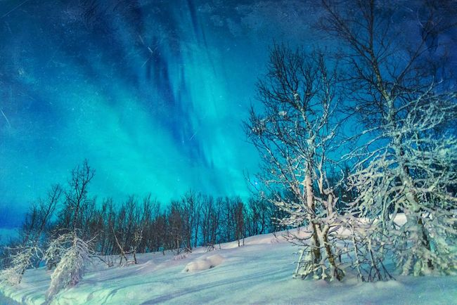 Winter Blues Showcase: March Aurora Aurora Borealis Northern Lights Lapland Sweden Night Photography Light Show Snow Scene  Snow At Night Blue Beautiful Nature Snow And Tree Swedish Landscape Snow Landscape  Lapland Landscape