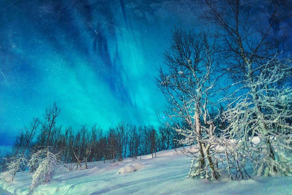 Winter Blues Showcase: March Aurora Aurora Borealis Northern Lights Lapland Sweden Night Photography Light Show Snow Scene  Snow At Night Blue Beautiful Nature Snow And Tree Swedish Landscape Snow Landscape  Lapland Landscape