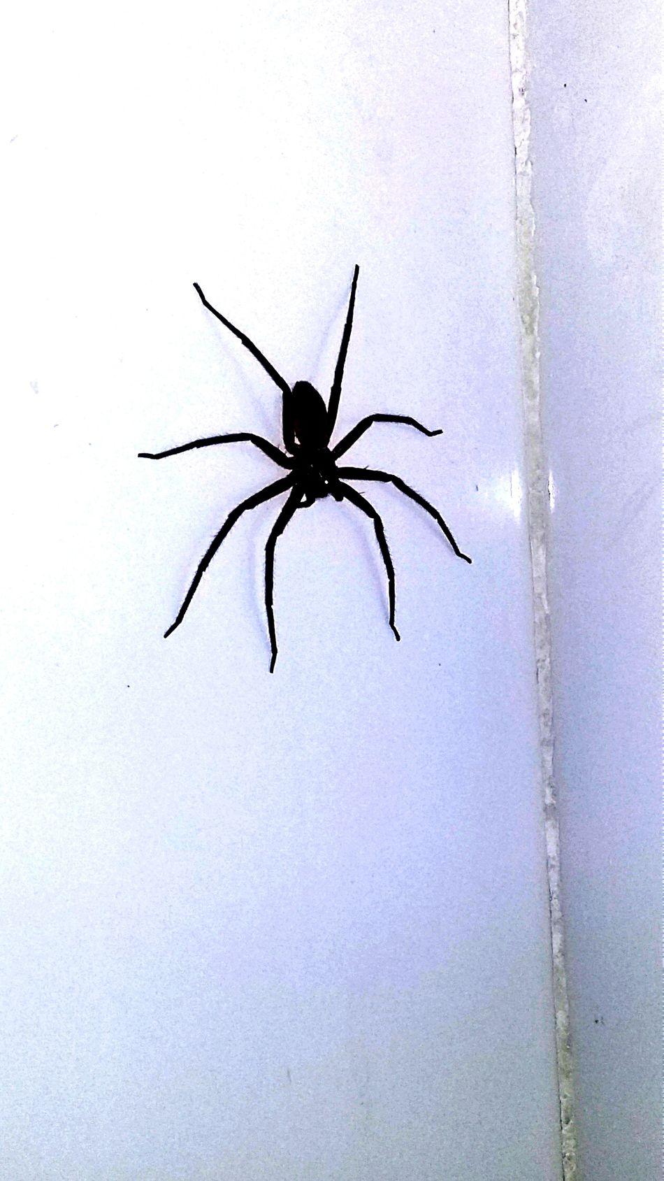 Spider in dorm College Dorms Student Life Badassspider