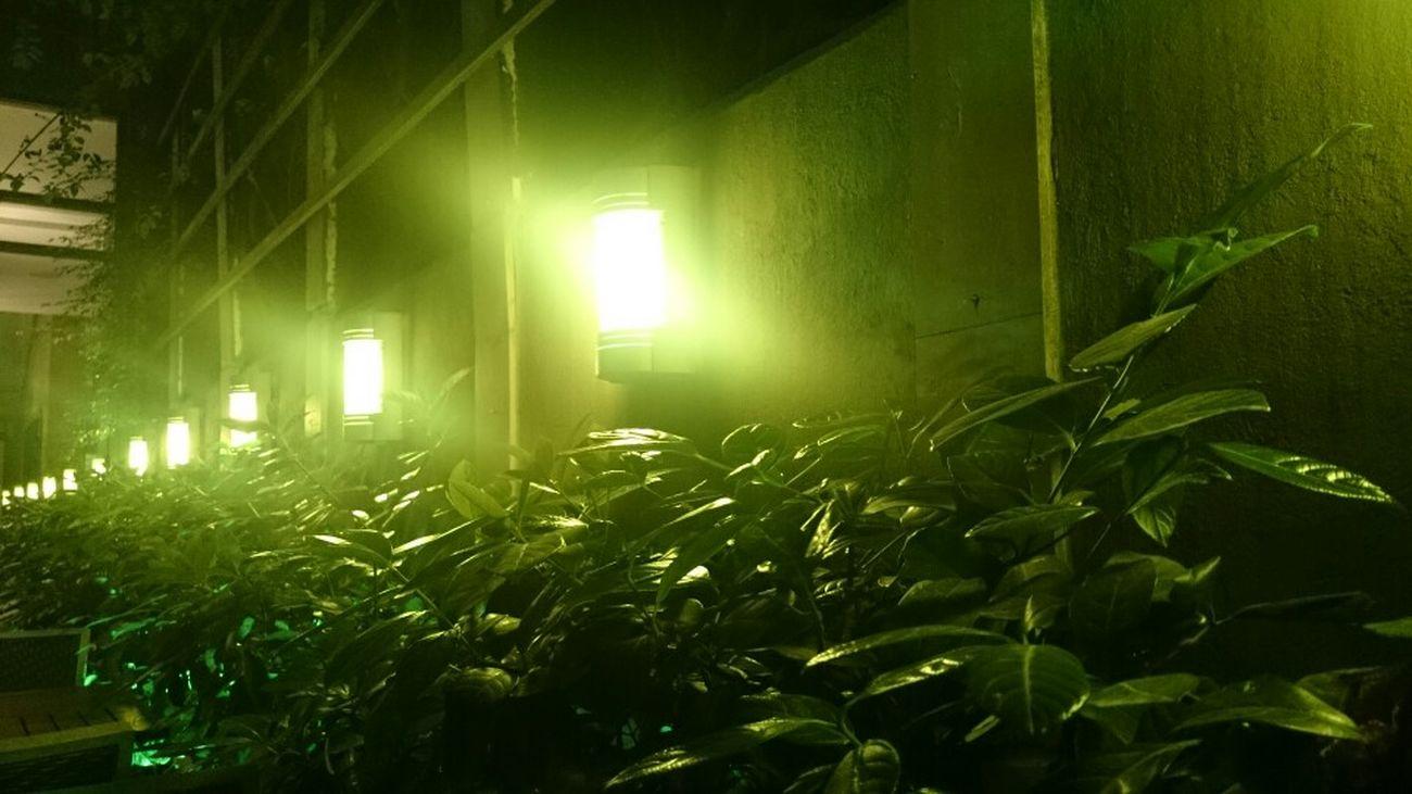 Green Garden Beirut Sodeco