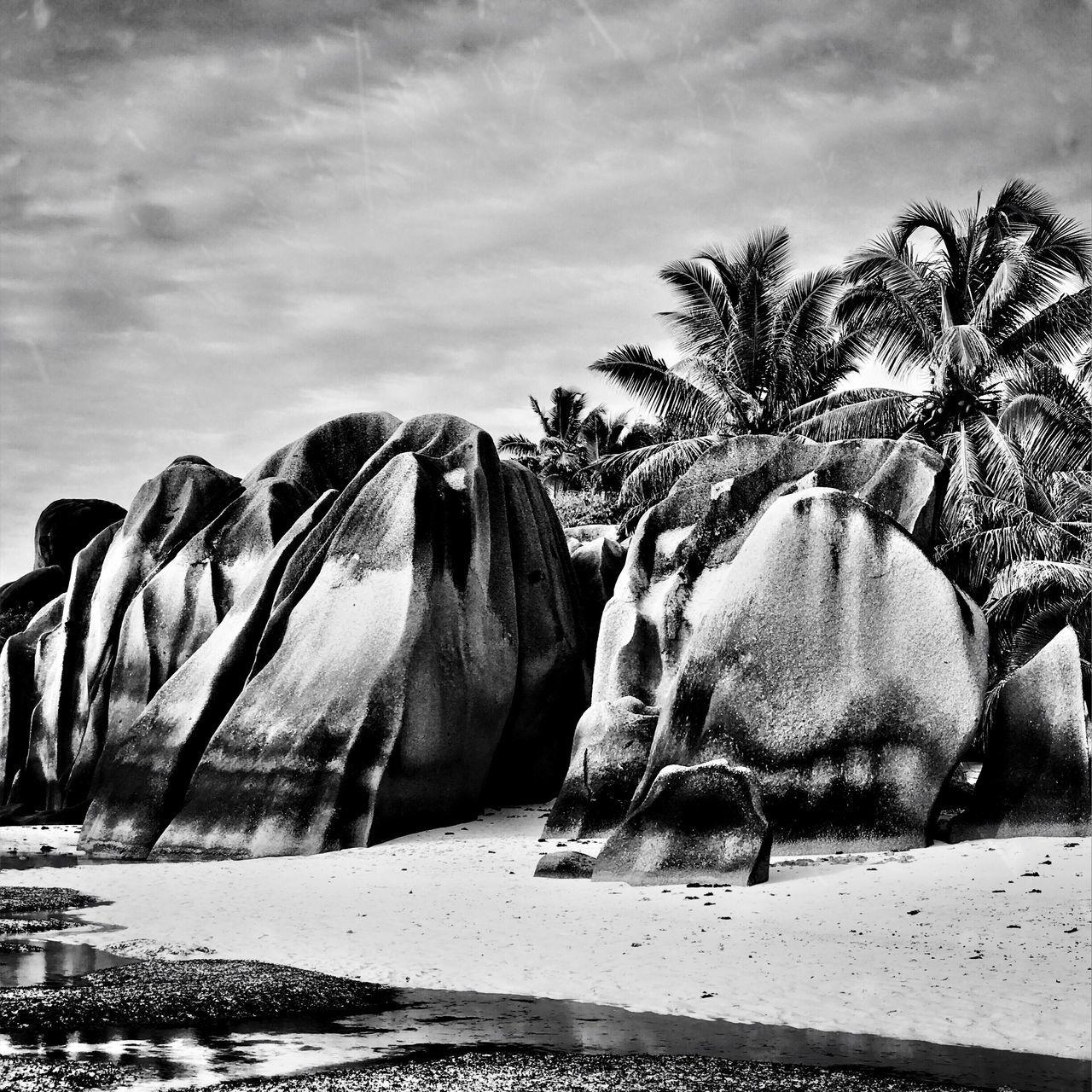 Beautiful beach Sky Animal Themes Nature No People Day Mammal Outdoors Domestic Animals Beach