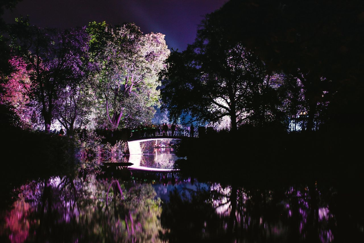 tree, beauty in nature, nature, purple, water, growth, no people, lake, outdoors, scenics, tranquility, night, sky, flower