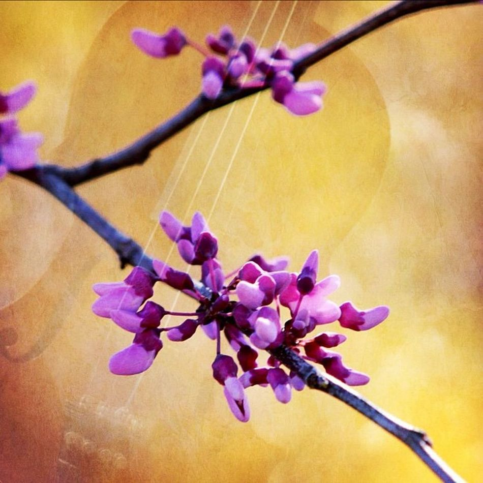Playing around with Image Blender. #music #bokeh #flowers #crabapple #violin #earlybird #igdaily #instaaaaah #instagramhub #instagood #igers #the_guild #iloveblossomtrees #blend #willitblend Music Naturediversity Bokeh Jj_forum_0310 Violin Willitblend Instamood Blend Earlybird Igers IGDaily Instagood Instaaaaah Instagramhub The_guild _wg Jj_forum_0305 Jj_forum_0315 Iloveblossomtrees Flowers Crabapple