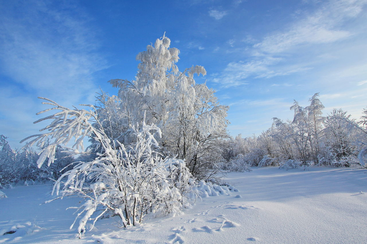 snow, cold temperature, winter, sky, nature, tranquil scene, beauty in nature, blue, scenics, tranquility, cloud - sky, frozen, landscape, day, tree, outdoors, no people, bare tree, freshness