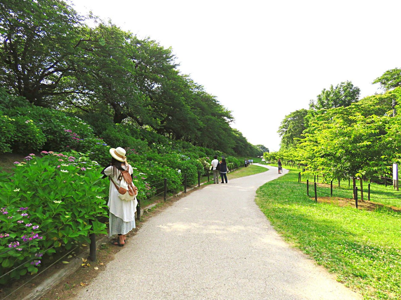 Tree Walking Day Full Length Outdoors Only Women Adult People Togetherness Growth Women Grass Nature Young Women Sky 紫陽花 Rural Scene Agriculture Adults Only Friendship Young Adult 権現堂 紫陽花はまだまだの咲き具合…またリベンジに行かなきゃ!