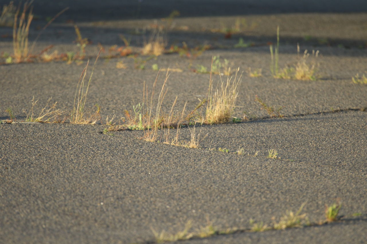 Close-up Day Gras Between Concrete Grass Nature No People Outdoors Pioneer Plants Pioneers Plaster