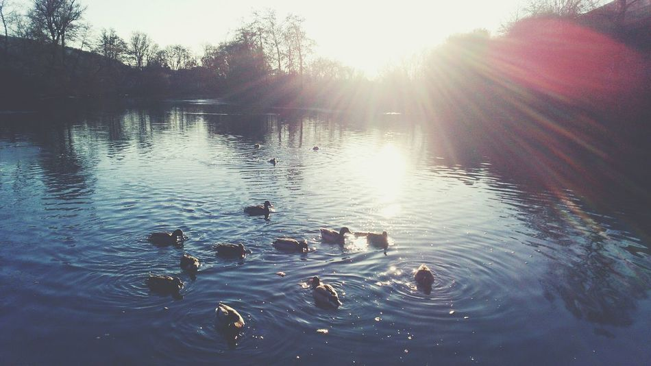 Sunset Sunlight Nature Water No People Sun Outdoors Beauty In Nature Day Nature PixlrExpress Beauty Marburg An Der Lahn Winter Frozen Sony Xperia Marburg Clear Sky Colorful Ducks River Sunbeams Feeding Animals The City Light