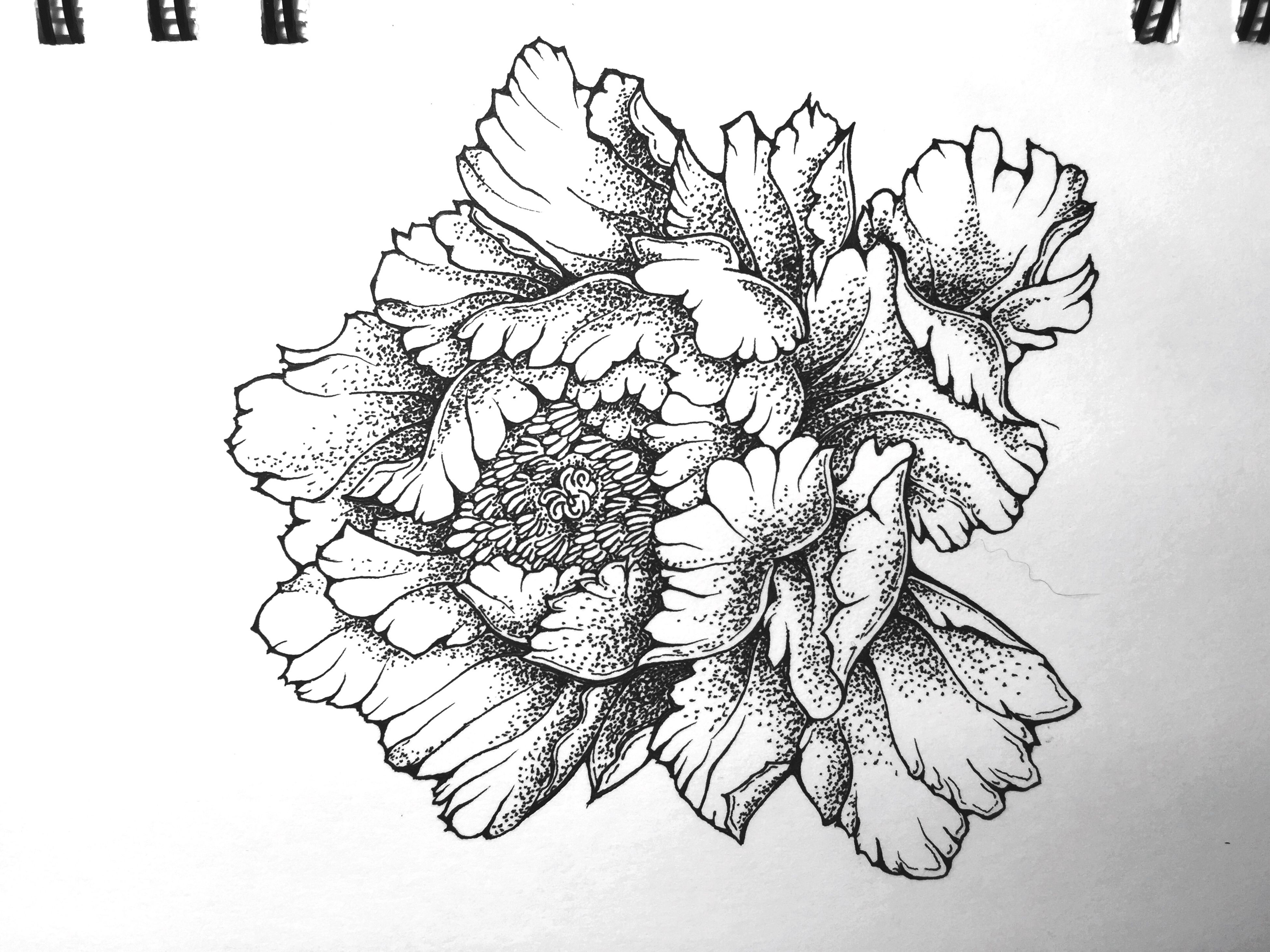 pencil drawing, sketch, paper, flower, white background, nature, close-up, ink, no people, branch, sketch pad, flower head, day