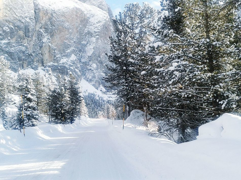 Strada o pista? Snow On The Road White Pines EyeEm Nature Lover Skiing Everyday Joy Whiteness Winter Capture The Moment