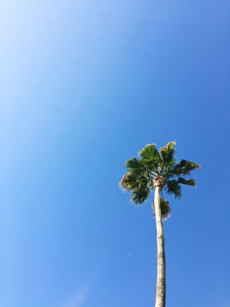 Beautiful stock photos of los angeles, Los Angeles, United States, beauty in nature, blue