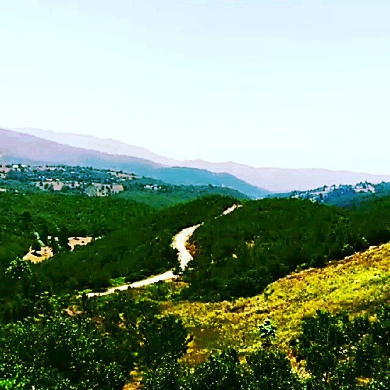 mountain, scenics, nature, landscape, tranquil scene, green color, mountain range, rural scene, beauty in nature, field, lush foliage, outdoors, day, tree, agriculture, no people, sunlight, forest, tranquility, yellow, travel destinations, clear sky, sky, freshness