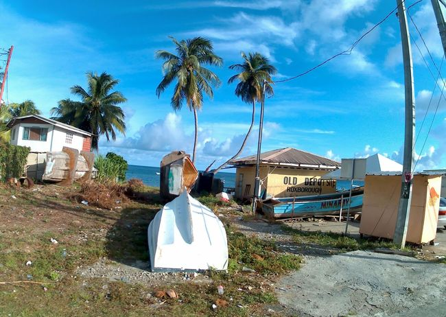 Tourist Destination Tobago Rural Scenes Rural Exploration Boats⛵️ Coconut Trees Countryside Country Road Tobagolove