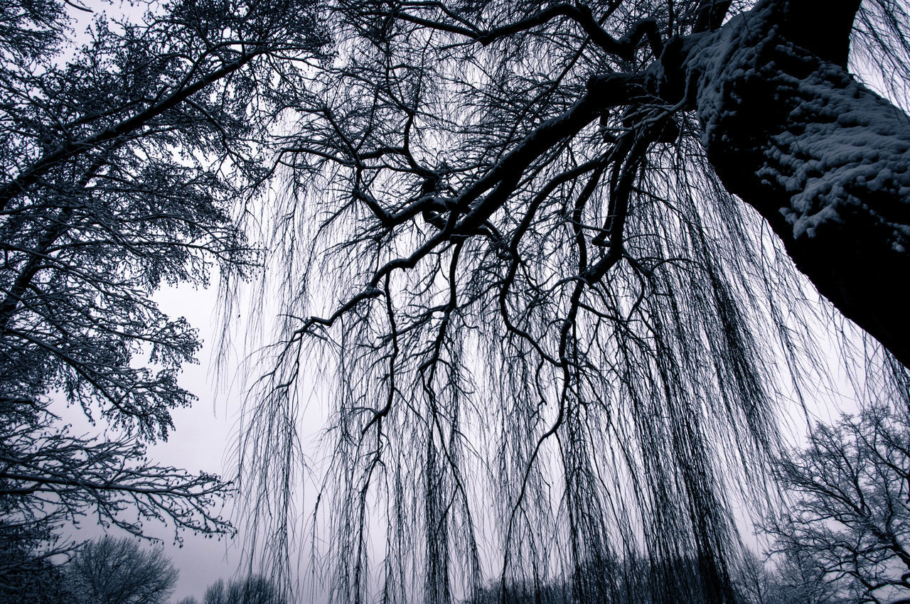 Low Angle View Of Trees With Snow During Winter