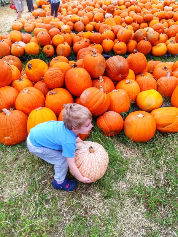 People Pumpkin Child Casual Clothing Childhood Full Length Children Only One Person Bending Over Picking