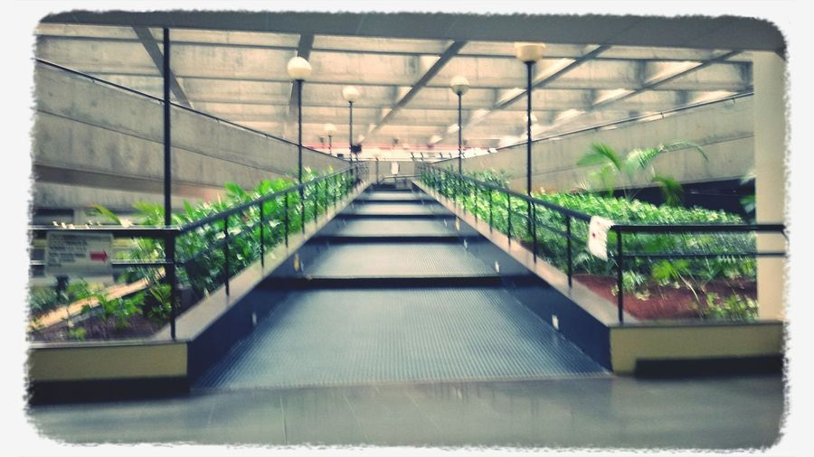 There is Beauty even in the Grimmiest Of Places * Picture taken at Criminal Court of Barra Funda / São Paulo * Inner Garden