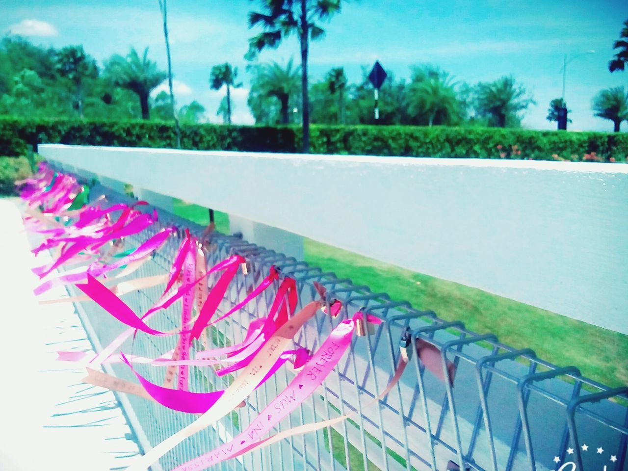 swimming pool, tree, outdoors, day, no people, pink color, nature, grass, palm tree, close-up, water, sky