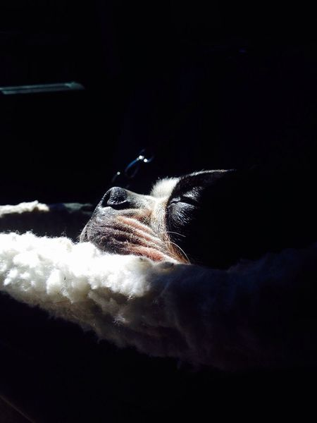 Taking Photos Domestic Animals Animal Themes One Animal Pets No People Day My First Eyem Photo <