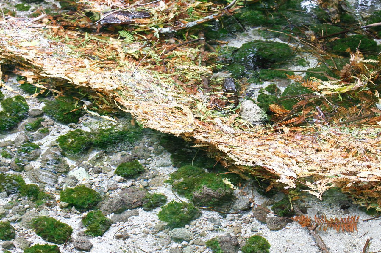 high angle view, nature, rock - object, no people, day, growth, outdoors, beauty in nature, water, plant, moss, leaf, close-up